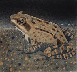 V Sammakko 1986, akvatinta etsaus,9,5x10cm pieni